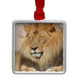 Adorable Lion Metal Ornament