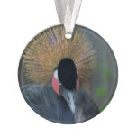 Curious African Crowned Crane Ornament
