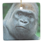 Perplexed Gorilla Ceramic Ornament