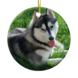Siberian Husky Dog Ornament