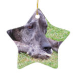 Sweet Great Dane Ornament
