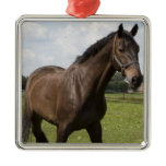Thoroughbred Horse Ornament